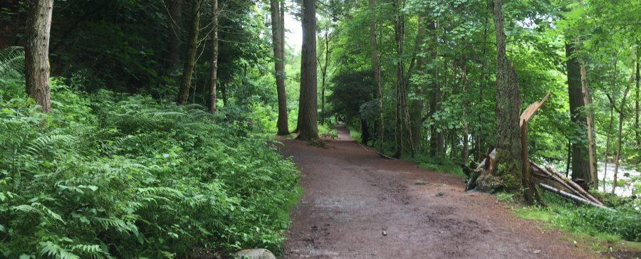 Hermitage Forest, SCotlant